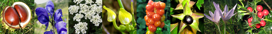 Plantes toxiques en Lorraine